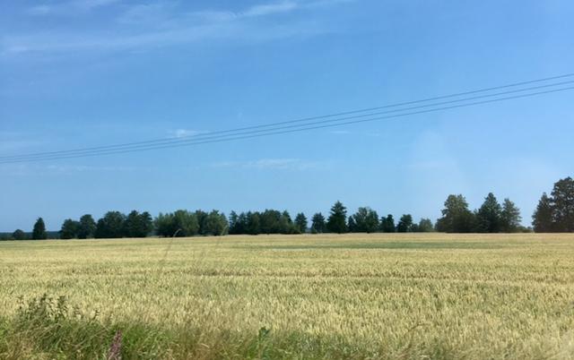 ポーランドで過ごす快適な夏