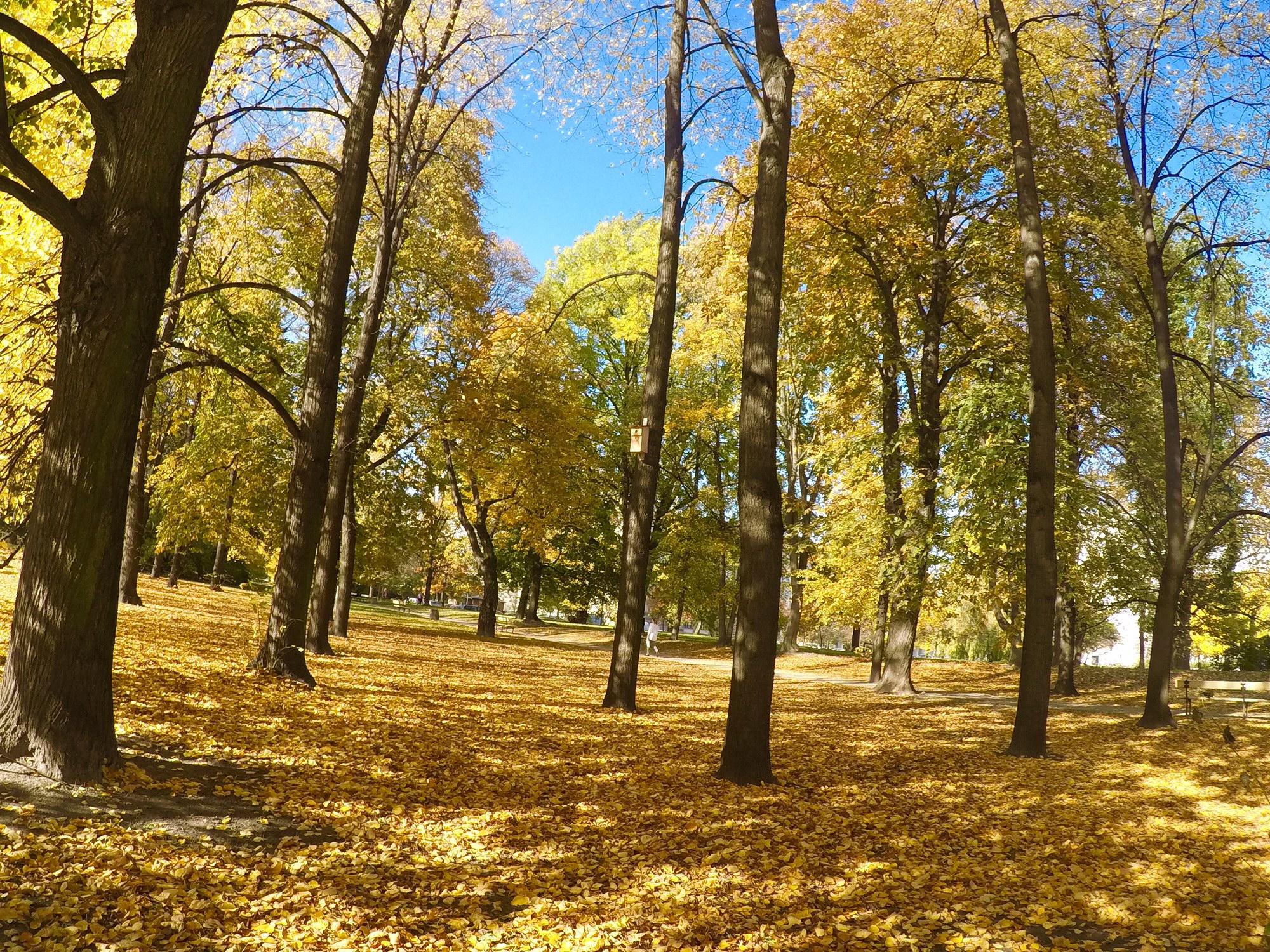 ポーランドのベストシーズン 黄金の秋