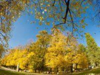 ワルシャワサスキ公園の紅葉